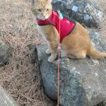 Hobbes on a leash